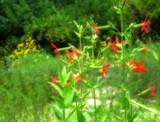 Wildflowers by jojomercury, Photography->Flowers gallery
