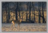 Tongue And Cheek by tigger3, Photography->Animals gallery