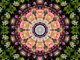 Flower Power #3 by LynEve, photography->manipulation gallery