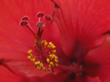 A red DT by rawtsn, Photography->Macro gallery