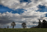 Tree Line by verenabloo, Photography->Landscape gallery