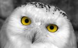 Pleeeeez !?! by boremachine, Photography->Birds gallery