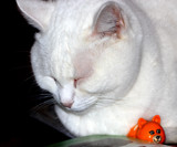 Minnie and Friend by tigger3, photography->pets gallery