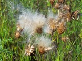 Seeds by kidder, Photography->Nature gallery
