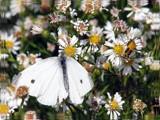 5000 by Hottrockin, Photography->Butterflies gallery