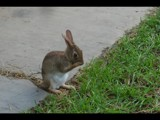 Little Bunny Has a Secret by imbusion, Photography->Animals gallery