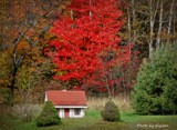 Mini house by GIGIBL, photography->landscape gallery