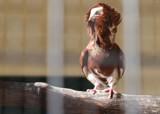 Captivity by jamcivic, photography->birds gallery