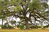 Gateway Oak by allisontaylor, photography->landscape gallery