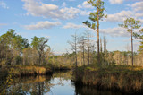 Bayou Castille in Winter by allisontaylor, photography->shorelines gallery
