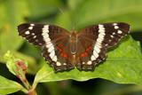 Butterfly snap shot by Paul_Gerritsen, Photography->Butterflies gallery