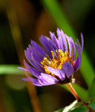 Wildflower 2 by gerryp, Photography->Flowers gallery