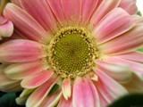 Powderkeg by Hottrockin, Photography->Flowers gallery
