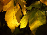 Early autumn #2 by annie100, Photography->Nature gallery