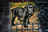 The Guard Puppy by snapshooter87, photography->manipulation gallery