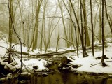 Sepia Stream by Jeremy805, Photography->Landscape gallery