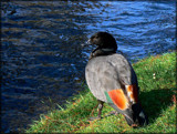 Are my tail feathers straight? by LynEve, Photography->Birds gallery
