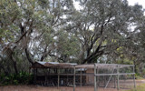 Live Oaks & Chicken Pen by 0930_23, photography->landscape gallery
