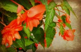 Touch of Orange! by Starglow, photography->flowers gallery