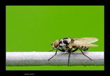 Spotted by kodo34, photography->insects/spiders gallery