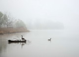 Misty Morning 3 by gerryp, Photography->Landscape gallery