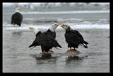 Three Bumps on a Log by garrettparkinson, photography->birds gallery