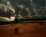 Golden Bales by LANJOCKEY, Photography->Landscape gallery