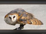 Talons VI by Hottrockin, Photography->Birds gallery
