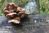 Mushroom Falls by papadave, photography->mushrooms gallery