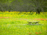 Spring picnic by a2002swim, photography->landscape gallery