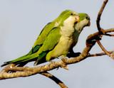 Three by jeenie11, photography->birds gallery