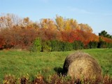 Hay Autumn! by kidder, Photography->Landscape gallery