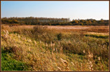 In The Marsh by corngrowth, photography->landscape gallery