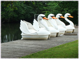 Four Swans On The Dock by ohpampered1, Photography->Boats gallery