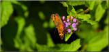 A Calendar Garden Flutterby by tigger3, photography->butterflies gallery