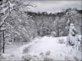 Winter White 2 by amishy, Photography->Landscape gallery