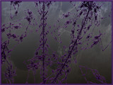 Purple Storm by Joanie, abstract->fractal gallery