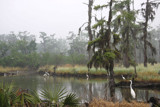 Early Morning Mist in the Louisiana Swamp by Vivianne, Photography->Landscape gallery