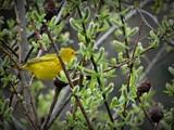 Birds #31 by picardroe, photography->birds gallery