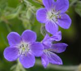 Found in a Master Garderner's Garden by Pistos, photography->flowers gallery