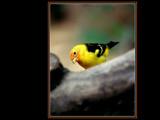 Little Bird by photoimagery, Photography->Birds gallery