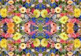 Kaleidoscope #1 by HylianPrincess1985, Photography->Flowers gallery