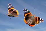 Bye, Bye, Butterfly by Paul_Gerritsen, Photography->Butterflies gallery