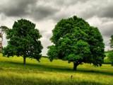 2 3s by roxanapaduraru, photography->landscape gallery