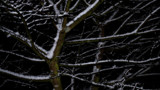 Night Snow by braces, photography->nature gallery