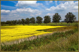 Yellow Is The Color Of ... by corngrowth, photography->landscape gallery