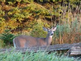SEPTEMBER MORNING by picardroe, photography->animals gallery