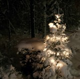 Christmas tree by Elini, photography->landscape gallery