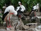 Stork paradise by Paul_Gerritsen, Photography->Birds gallery