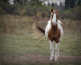 Horse # 4 by picardroe, photography->animals gallery